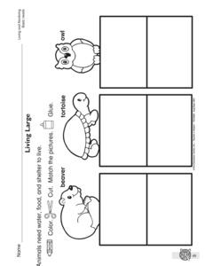 animal worksheet new 535 animal needs worksheet. Black Bedroom Furniture Sets. Home Design Ideas