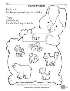 copy of animal lessons tes teach. Black Bedroom Furniture Sets. Home Design Ideas