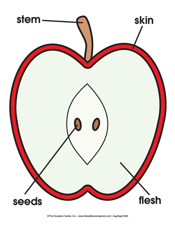 apples teaching activities ideas & lesson plans : apple diagram - findchart.co