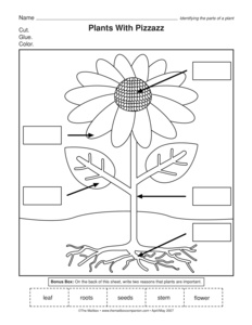 Parts Of A Plant Worksheet Kindergarten Photo Album - Worksheet for ...