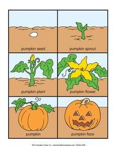 life cycle of a pumpkin