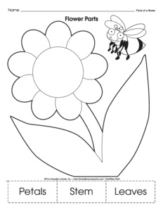 math worksheet : results for parts of a plant worksheet  guest  the mailbox : Parts Of A Plant Worksheet Kindergarten