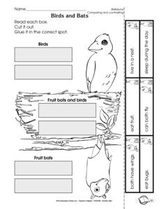 Stellaluna Worksheets