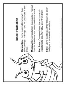results for animal adaptations kindergarten guest the mailbox. Black Bedroom Furniture Sets. Home Design Ideas